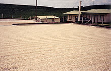 220px-Coffee_Drying_on_concrete_Patio